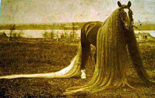 Лошадей которая долгое время