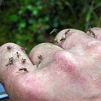 Почему так много комаров